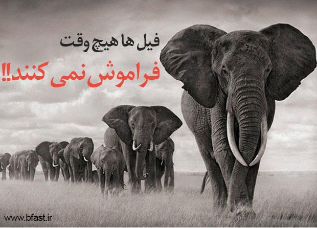 فیل درونتان را آزاد کنید (تقویت حافظه)