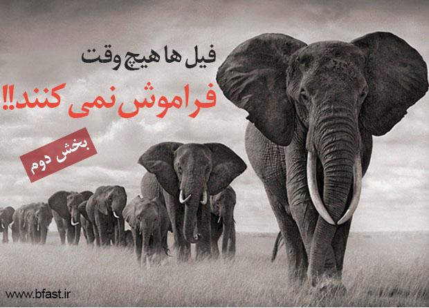 فیل درونتان را آزاد کنید 2 (تقویت حافظه)
